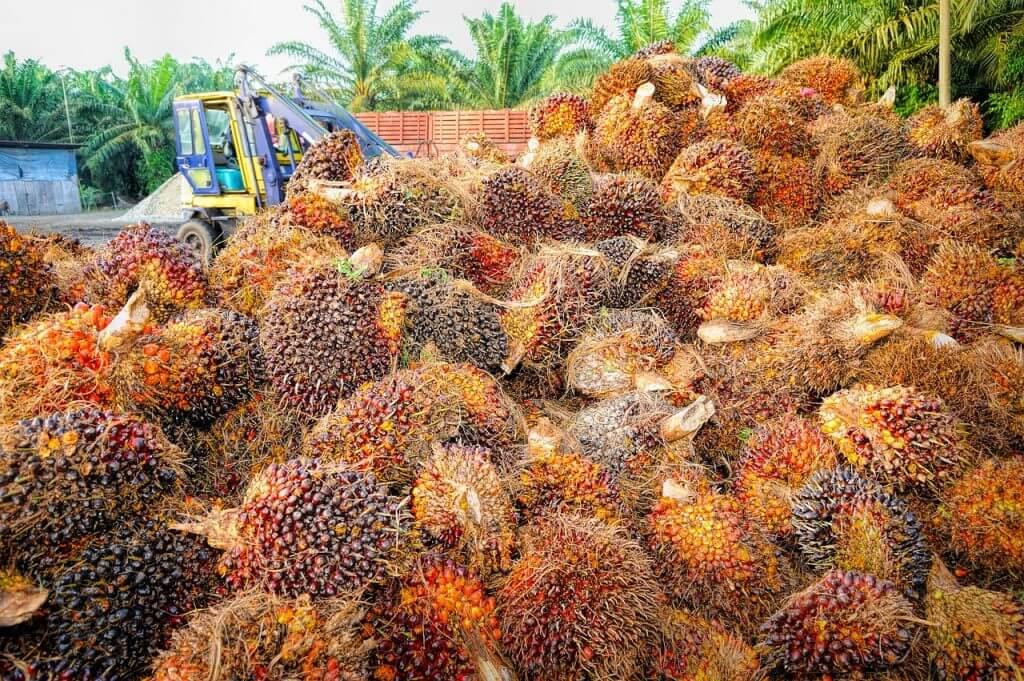 На добыче пальмового масла